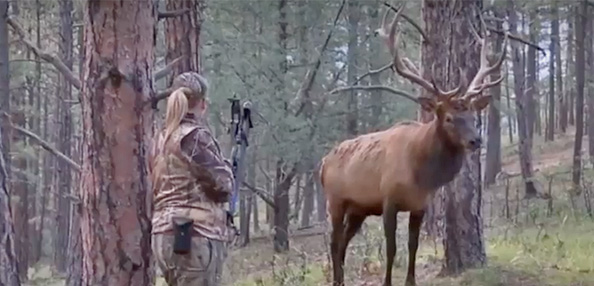 Video: Bull Elk Called to Lady Bowhunter