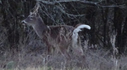 LETS WATCH SOME DEER: FEBRUARY 13