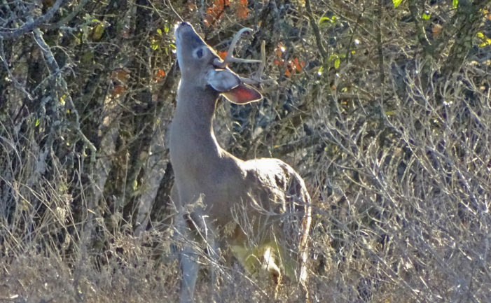 LETS WATCH SOME DEER: On February 8