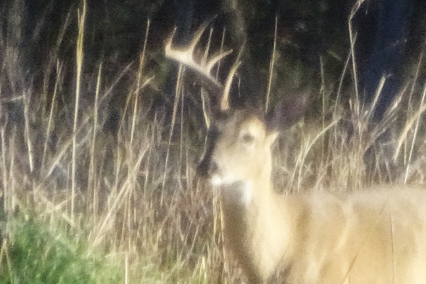 WHEN DO BUCKS SHED THEIR ANTLERS?