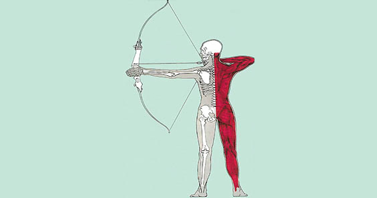 Archery Muscles and Exercises from Bowfit