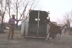 Project Mule / Episode 1