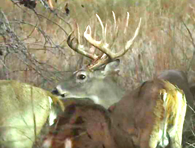 WATCH RICK PHILIPPI'S MONSTER BUCK BOWHUNT ON TV