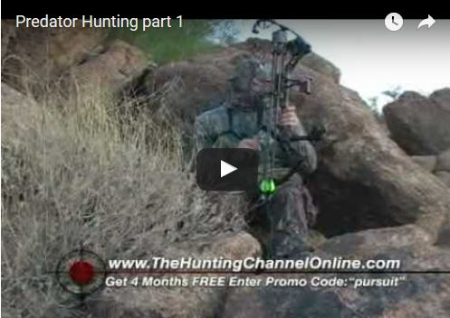 Bowhunting Coyotes Part 1