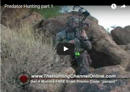 Bowhunting Coyotes Part 1