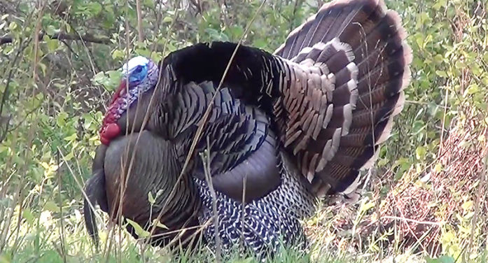 Calling All Gobblers! It's Opening Morning