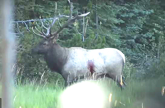 VIDEO: Montana Ek Wallow Bowhunt