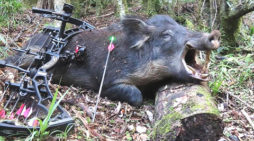 My Top 5 Best Tips for Bowhunting Wild Hogs