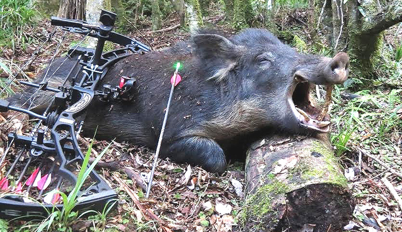 My Top 5 Best Tips for Bowhunting Wild Hogs | Bowhunting.Net