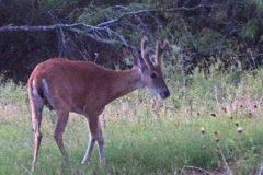 July 7-9 In The Deer Woods