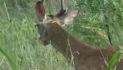Deer This Morning: July 12