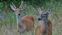 Deer Pictures: Something Different
