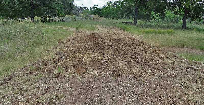 small food plot in the deer woods