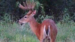 Magic Buck Day Rides Again