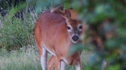 Deer 2017: Big Problems