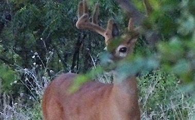 In The Deer Woods July 26