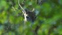 Last Of June Deer Pictures