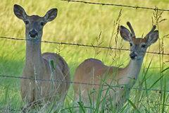 In The Deer Woods: July 4
