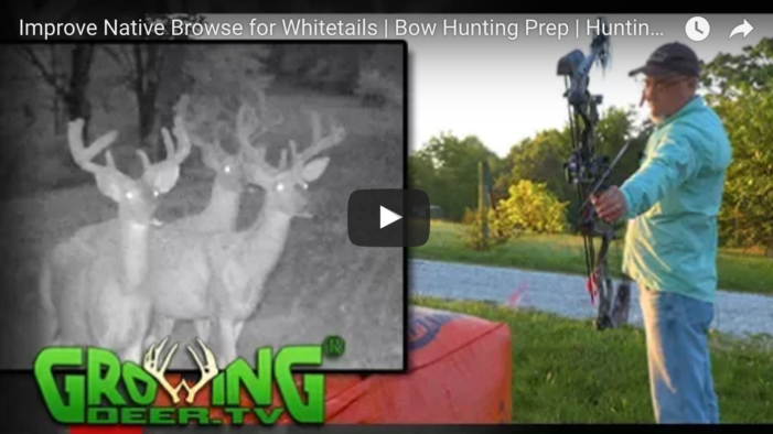 How To Improve Native Whitetail Browse