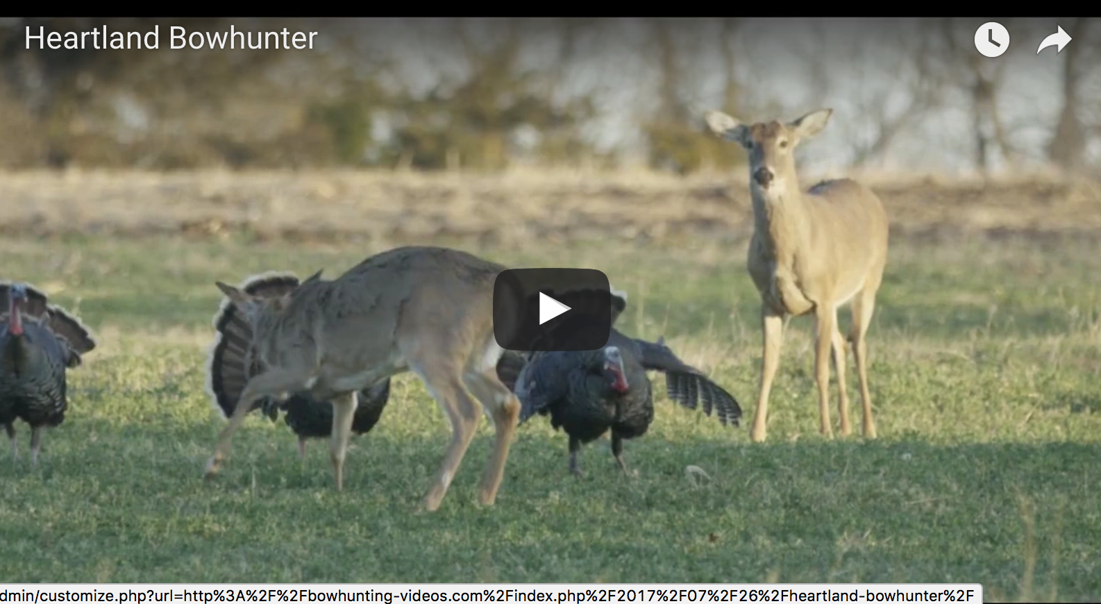 Wild Turkey Gobblers VS Whitetail Buck