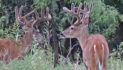 Here Comes August: Changes In The Deer Woods