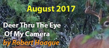 Deer Pictures in August by Robert Hoague