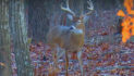 VIDEO: December Big Buck Strategy