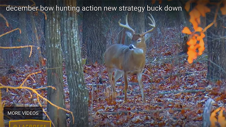bowhunting video