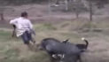 VIDEO: WILD BOAR GETTING WILD