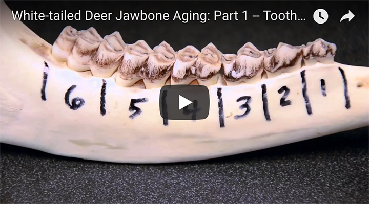 AGING DEER BY THEIR JAWBONE