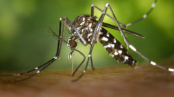 Mosquito Information For Hunters