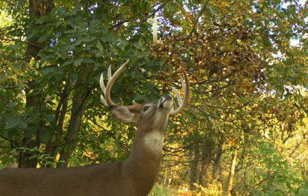 5 Ways to Stop a Deer in Your Shooting Lane Without Spooking it