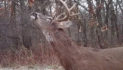How To Keep Bucks On Your Hunting Property