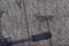 How To Control Deer Movement