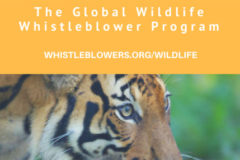 The Hunter-Whistleblower: A Potent Force Against WildlifeTrafficking
