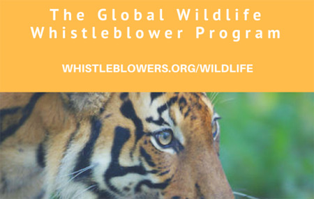 The Hunter-Whistleblower: A Potent Force Against Wildlife Trafficking