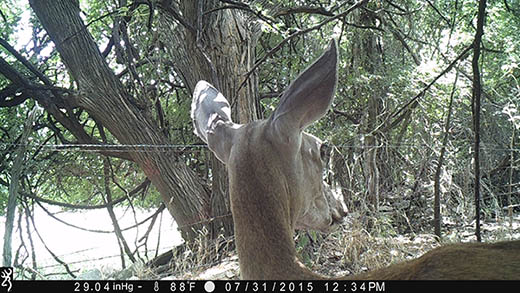 Game Cameras: Maybe, Maybe Not!