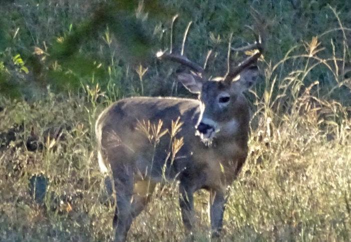 Back In The Deer Woods