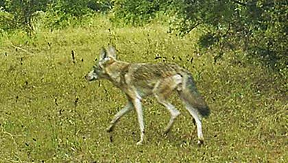 Predator Hunting Q&A