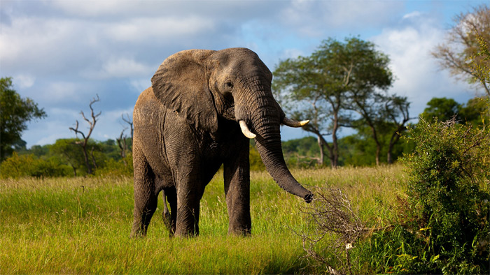 U.S. Now Allows Elephants From Zimbabwe, Zambia To Be Imported
