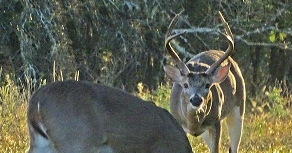 Deerhunting Ettiquette