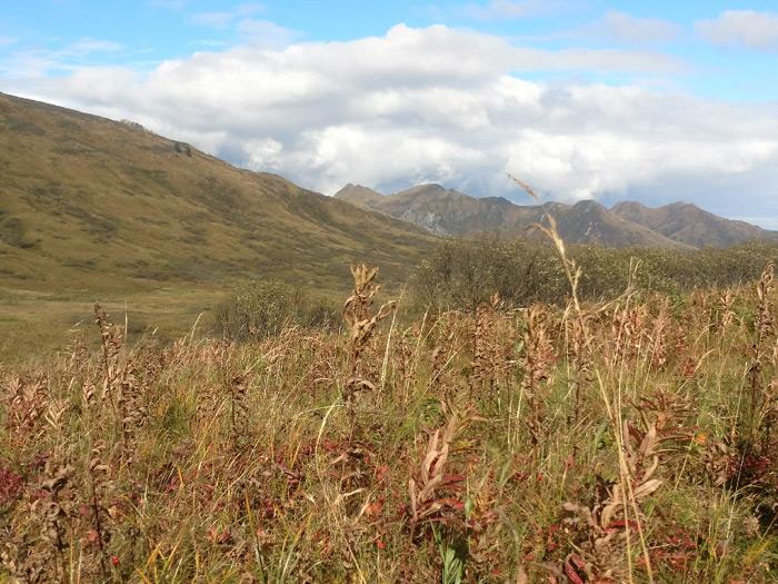 Sitka Blacktail Hunt: Kodiak, Alaska