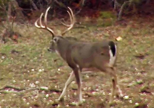 Pressure In Your Deer Woods