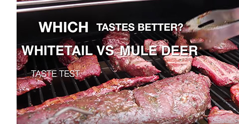 Which Tastes Better?  Whitetail or Mule Deer?