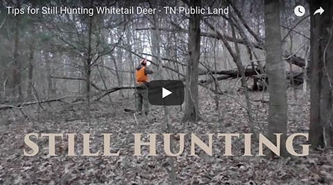 Tips For Still Hunting Deer