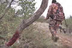 Dave Watson: Tips For Trailing And Recovering Deer