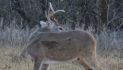 More January Deer