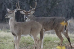 My Best Kept Deer Hunting Secret