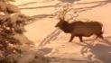 Winter: Where Do Animals Go?