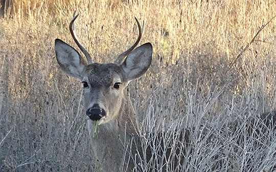 Another January Buck & Comments